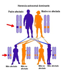 Herencia autosomal dominante