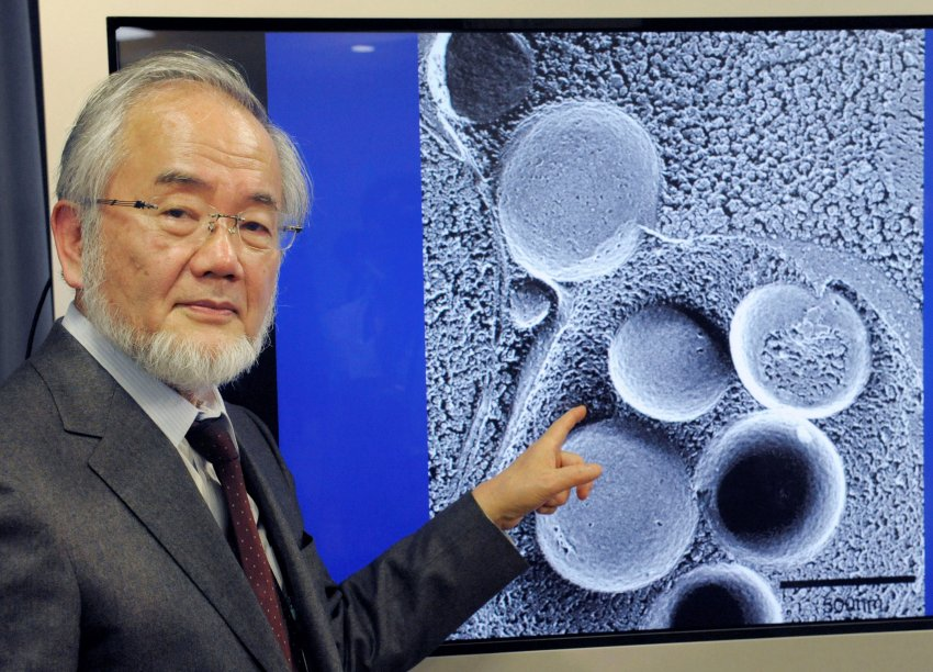 Premio Nobel de Medicina 2016 al investigador Yoshinori Ohsumi, del Tokyo Institute of Technology